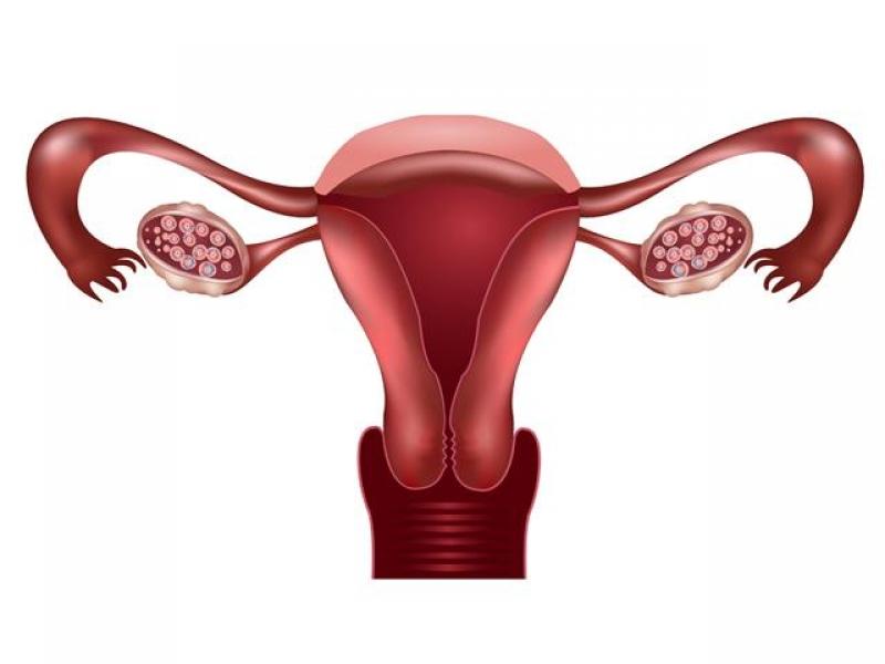 Гипоплазия матки или детская матка: симптомы, причины, лечение. Размеры матки в норме. Гипоплазия матки 1, 2, 3 степени и береме