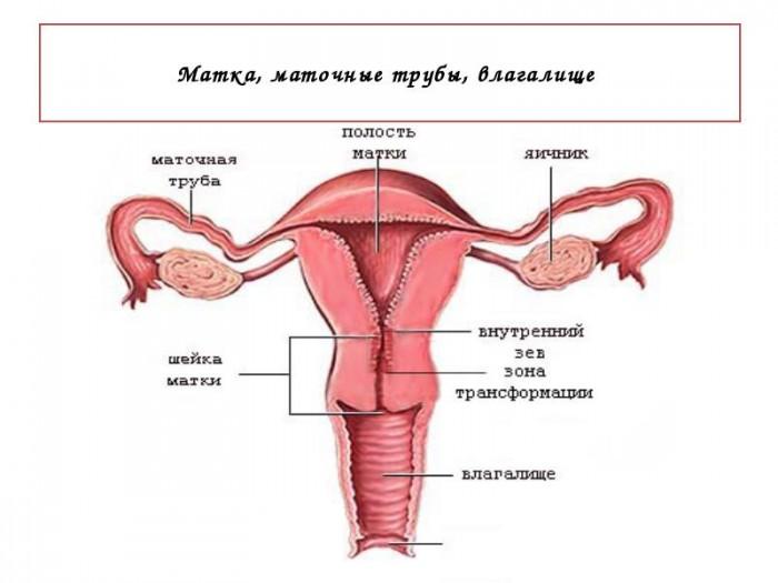 predmeti-dlya-vvedeniya-v-anus-pri-sekse