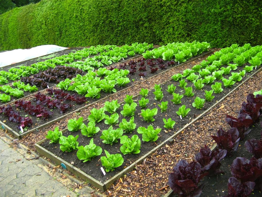 Дизайн сада и огорода своими руками картинки