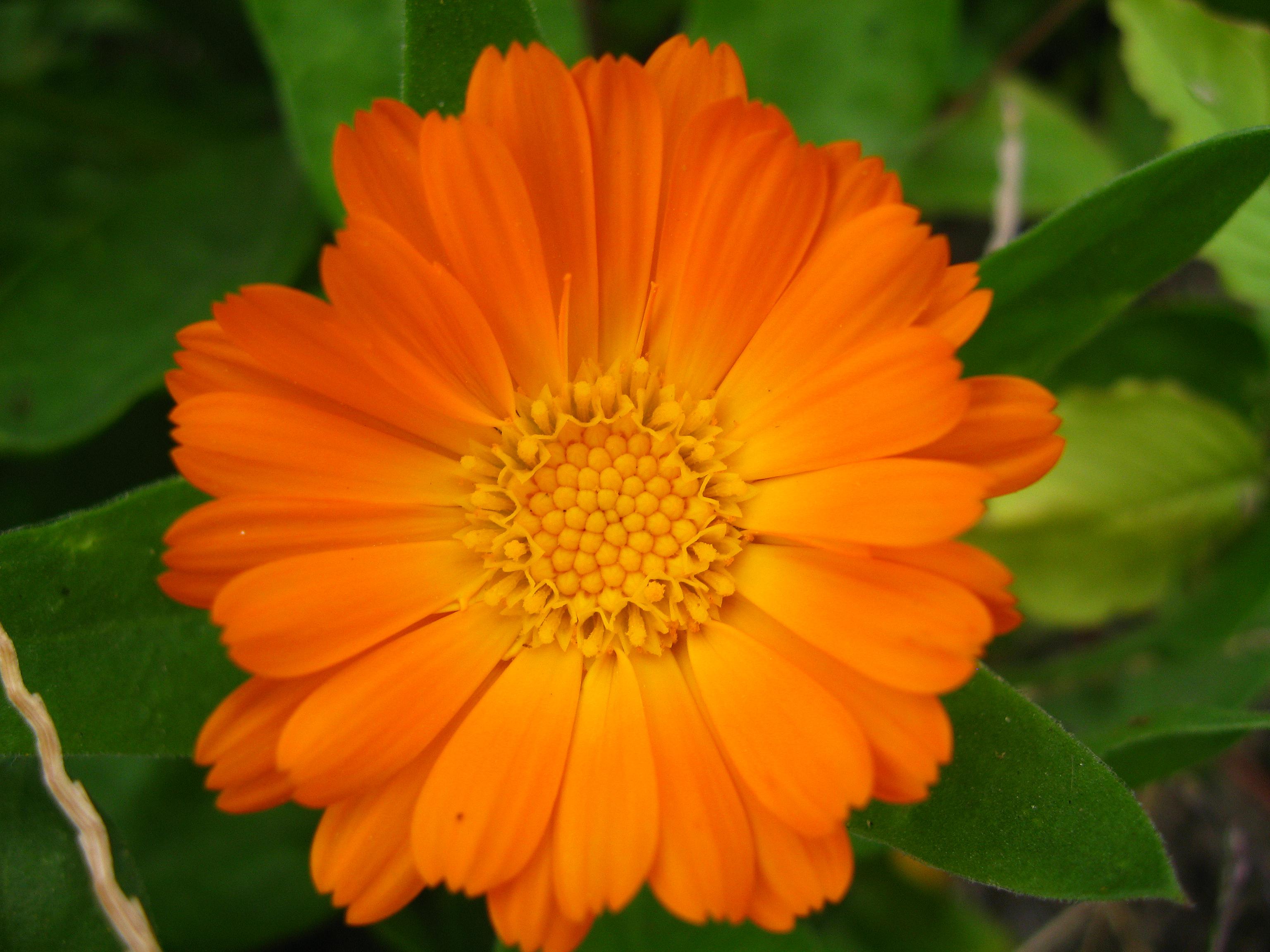Комнатные растения: фото с названиями. Фотографии 79