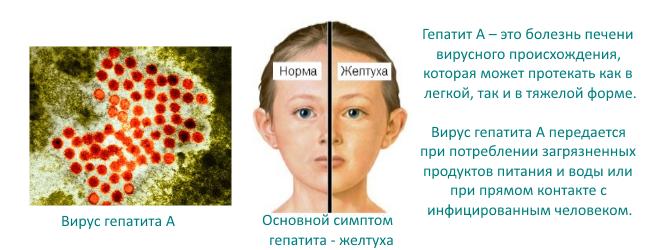 Может ли подняться температура после прививки от гепатита а