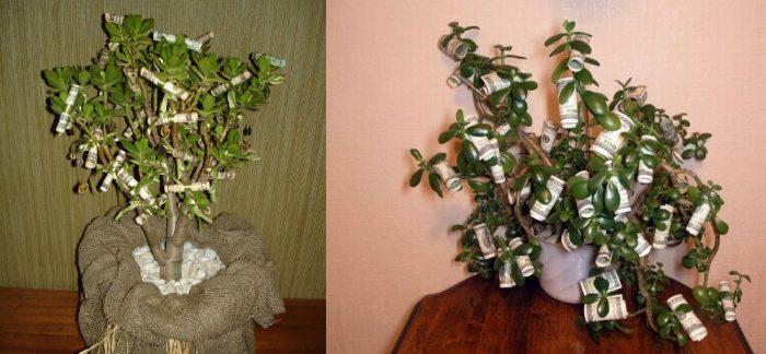 Стихи к подарку денежного дерева 596