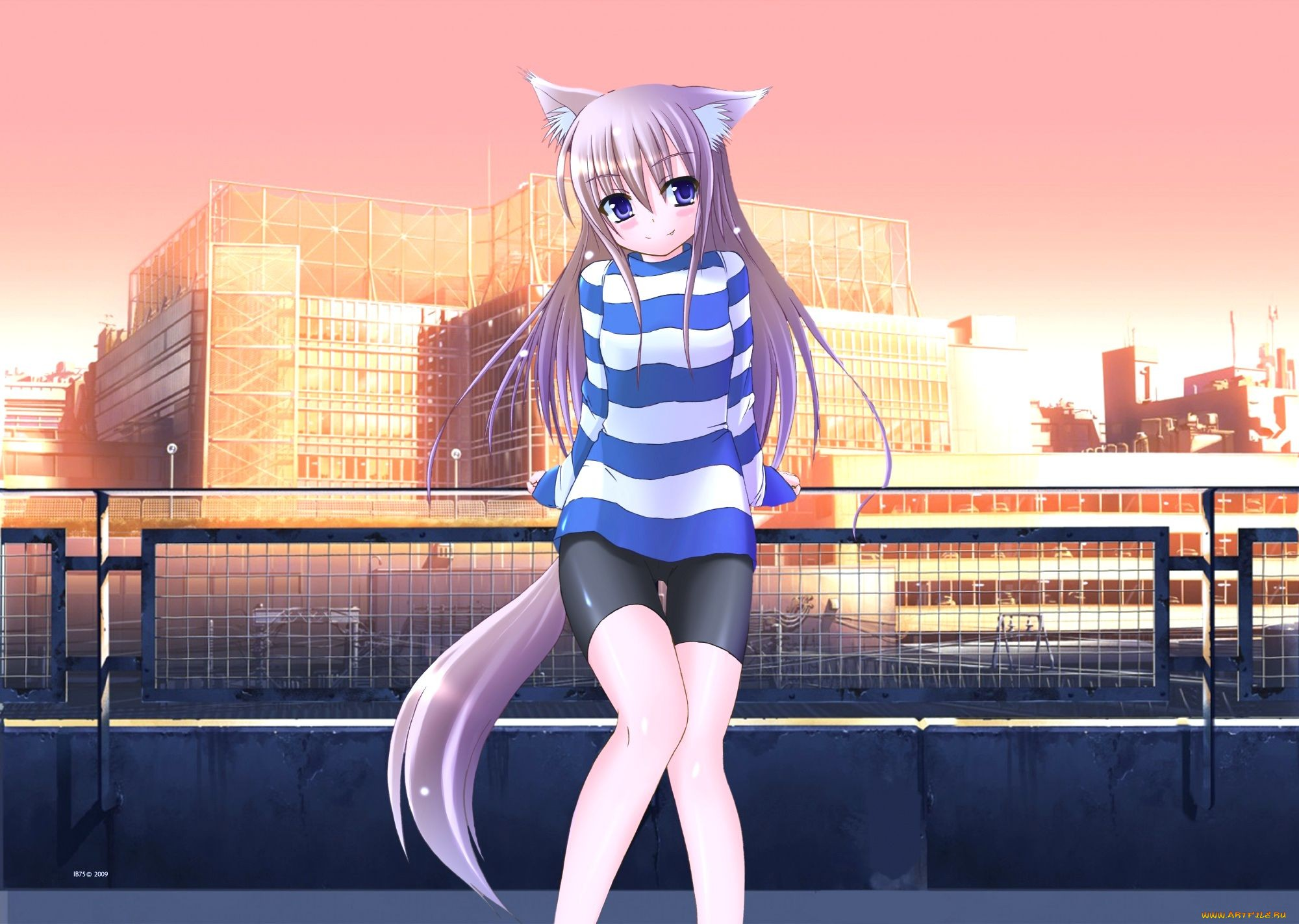 картинки аниме женщина кошка