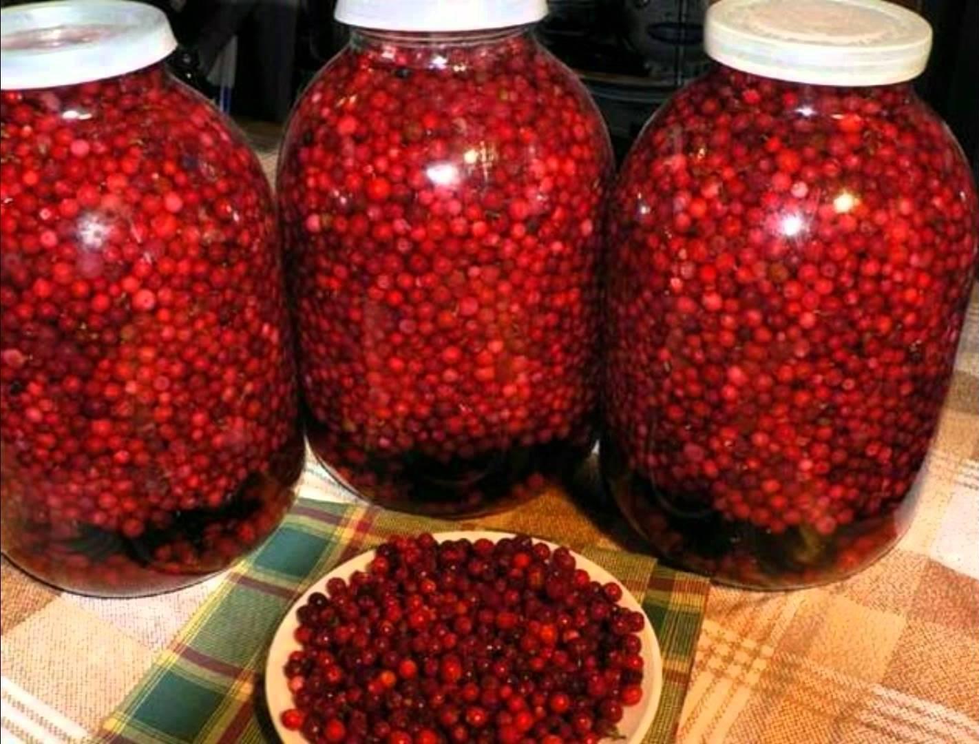 Калина: рецепты - заготовки на зиму. Правила сбора и хранение 35