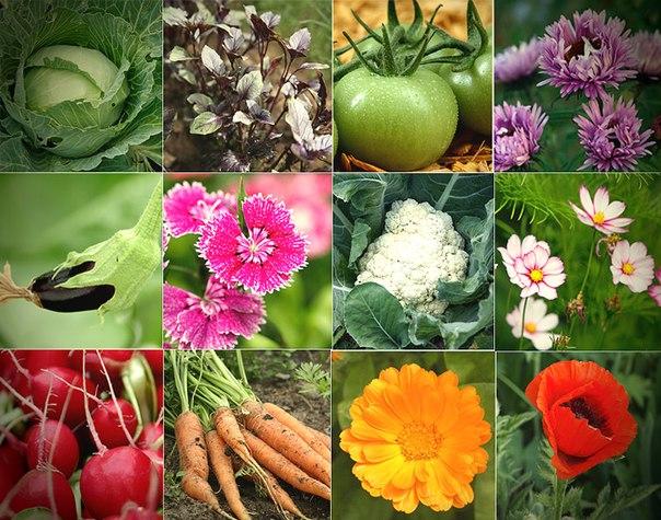 Огород и лунный календарь садовода и огородника Урала на август