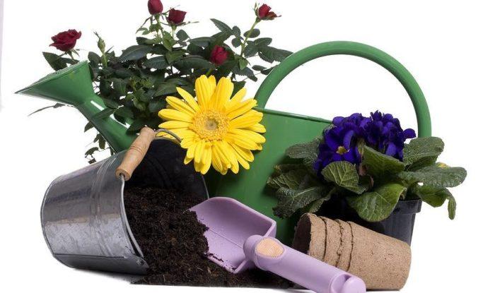 фото комнатных растений и цветов уход за ними