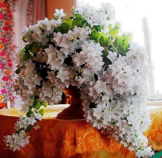 Фото цветка невеста и жених