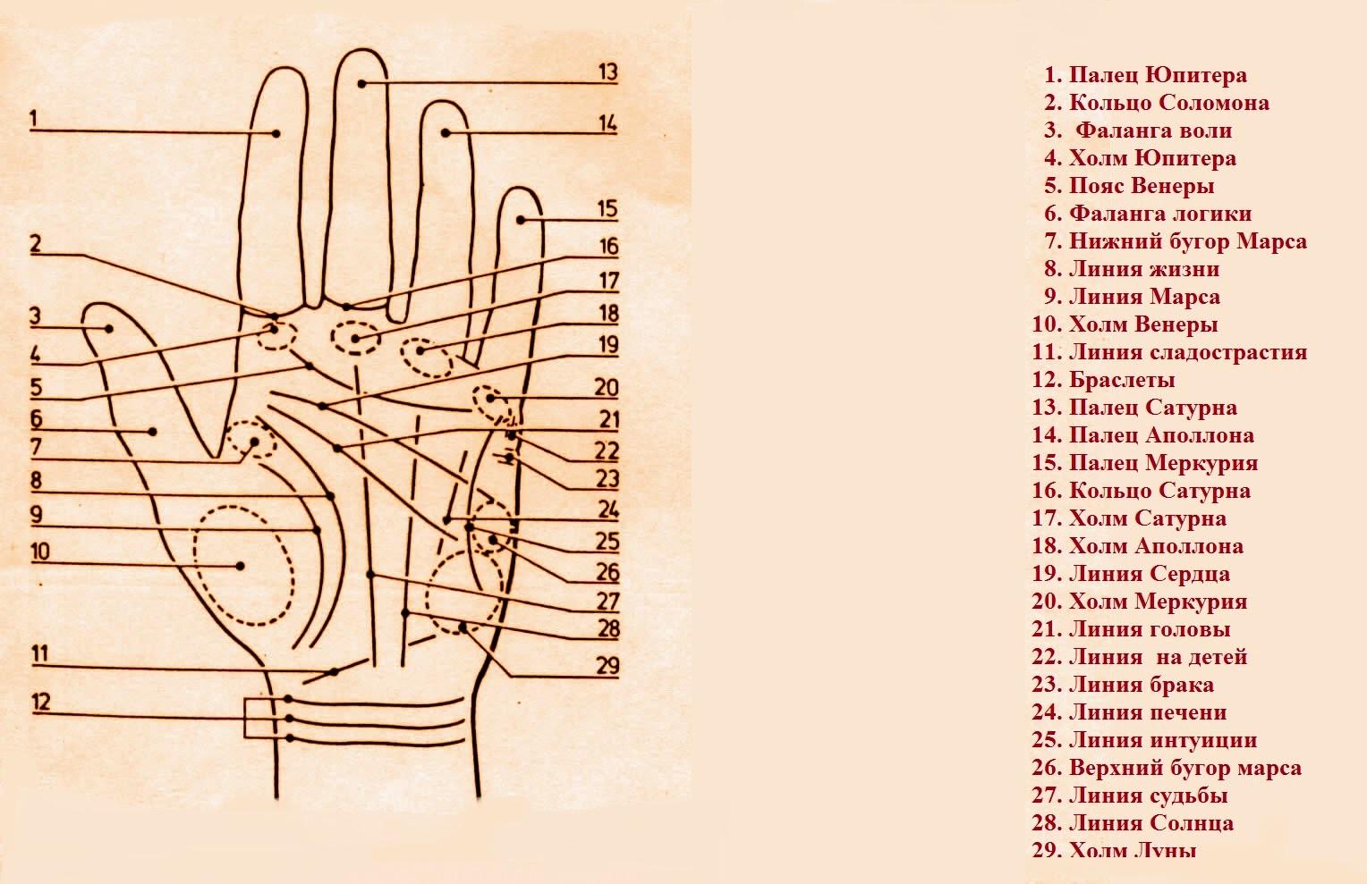 Линии на руке: что они означают? Как узнать свое будущее 76