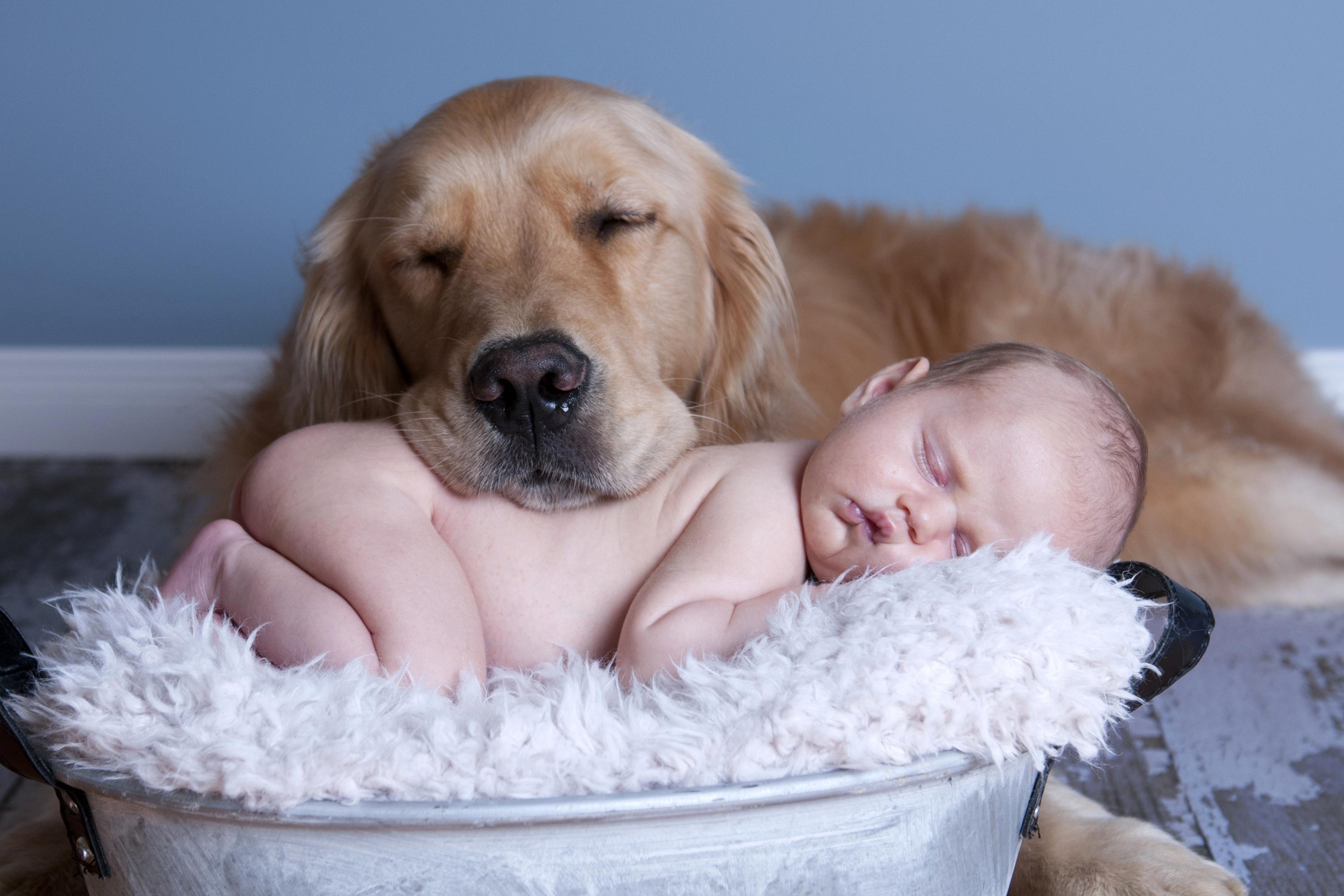 Собаки, которые идеально подходят для детей, любят детей: породы, список