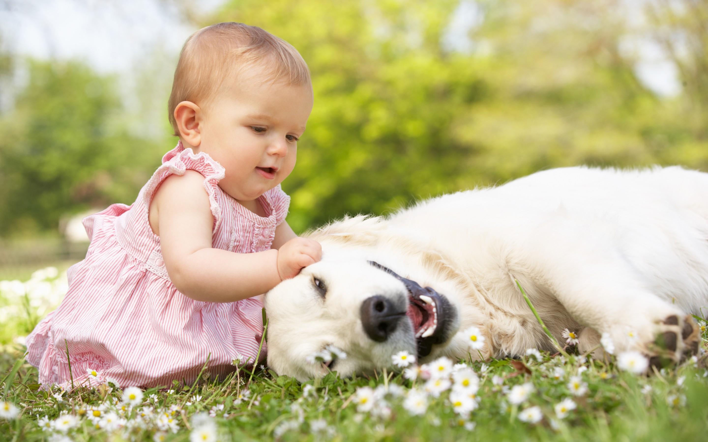 Собаки няньки для детей