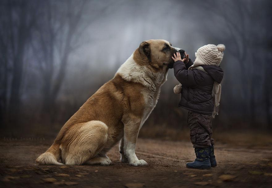 Какую собаку купить ребенку в квартире: лучшие породы собак для семей с детьми для квартиры
