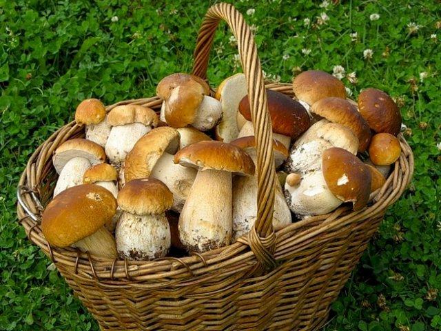 какие грибы собирать в сентябре фото
