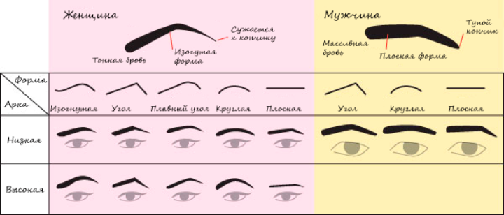 Types of eyebrows