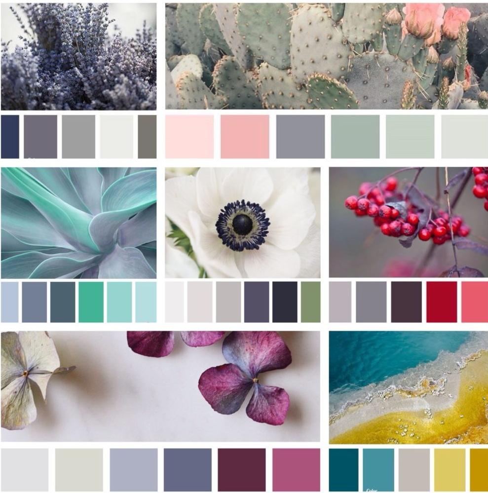 Лучшие сочетания цветов фото