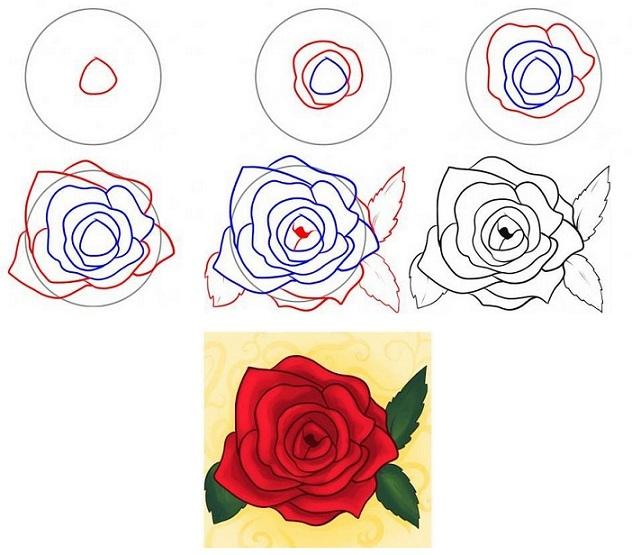 Как нарисовать розу своими руками поэтапно 100