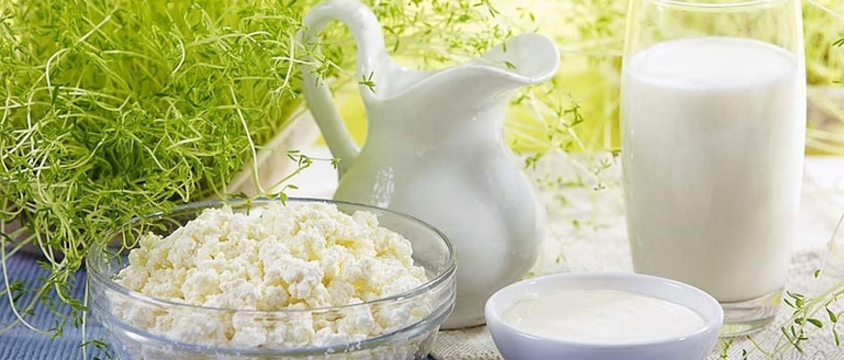 Использование и польза молочного гриба