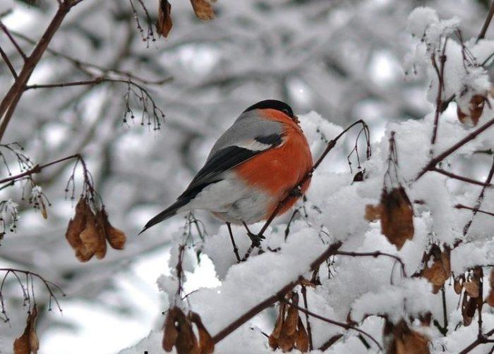 Огород и лунный календарь садовода и огородника Урала на декабрь
