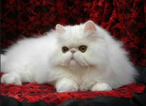 Как назвать кошку?